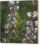 Summer Blooms Wood Print
