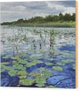 Summer Blue  Lake Under Clody Grey Sky With Forest On Coast Wood Print