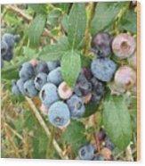Summer Blueberries Wood Print