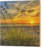 Summer Breezes Wood Print