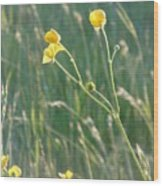 Summer Buttercups Wood Print