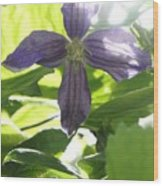 Summer Clematis In Light Shade Wood Print