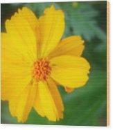 Summer Coreopsis Wood Print