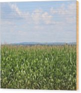 Summer Corn And Blue Skies In Maine  Wood Print