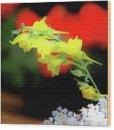 Summer Cuttings II Wood Print