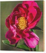 Summer Flower II Wood Print
