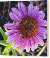 Summer Flower In Fading Light Wood Print