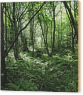 Summer Forest On A Sunny Day Wood Print