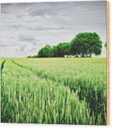 Summer Grains Wood Print