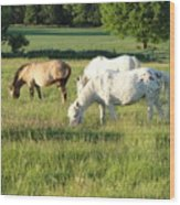 Summer Grazing Wood Print