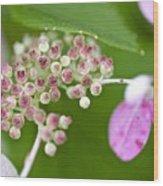 Summer Hydrangea 3 Wood Print
