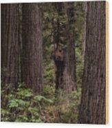 Summer In Redwood National Park Vertical Wood Print