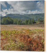 Summer In The Bald Hills 1 Wood Print