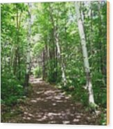 Summer In The Birch Grove Wood Print