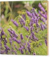 Summer Lavender In Lush Green Fields Wood Print