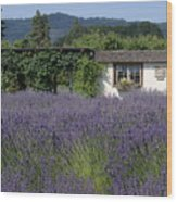 Summer Lavender Wood Print