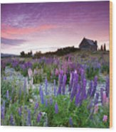 Summer Lupins At Sunrise At Lake Tekapo, Nz Wood Print by Atan Chua