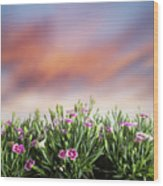 Summer Meadow Flowers In Grass At Sunset. Wood Print