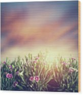 Summer Meadow Flowers In Grass At Sunset. Vintage Wood Print