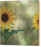 Summer Of Sunflowers  Wood Print