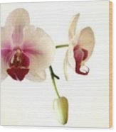 Summer Orchids Wood Print