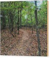 Summer Path At Shiloh Wood Print