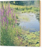 Summer Pond In The Berkshires Wood Print