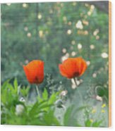 Summer Poppies Wood Print