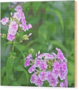Summer Purple Flower Wood Print