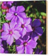 Summer Purple Phlox Wood Print