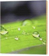 Summer Rain 2 Wood Print