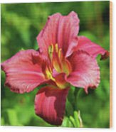 Summer Red Lily Wood Print