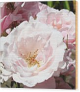 Summer Rose Garden Pink Flowers Baslee Troutman Wood Print