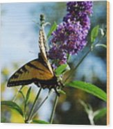 Summer Swallowtail Wood Print