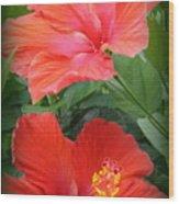 Summer Time Beauties - Hibiscus - Dora Sofia Caputo Wood Print