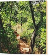 Summer Trail  Wood Print