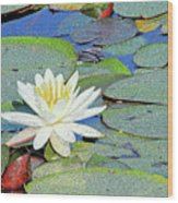 Summer Water Lily Wood Print