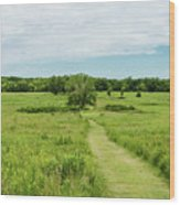 Summer's Day On The Prairie Wood Print