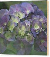 Summertime Blues- Hydrangea Wood Print