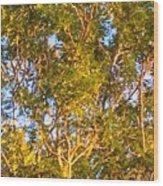 Summertime Tree Wood Print