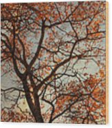 Summing Nature Call  Wood Print