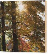 Sun And Autumn Wood Print