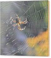Spider On Web Wood Print