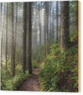 Sun Beams Along Hiking Trail In Washington State Park Wood Print