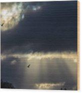 Sun Beams And Seagulls Wood Print