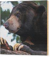 Sun Bear-7859 Wood Print