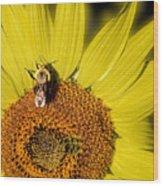 Sun Bee Wood Print