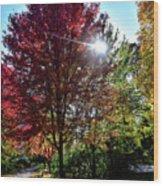 Sun Burst In Autumn Wood Print