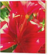 Sun Dappled Lily Wood Print
