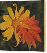 Sun Flower And Leaf Wood Print